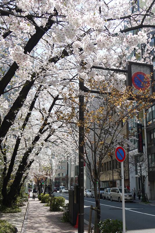 銀座桜通り